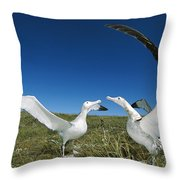 Antipodean Albatross Courtship Display Throw Pillow by Tui De Roy