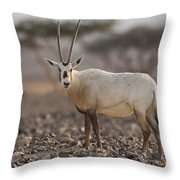 Arabian Oryx Oryx Leucoryx Throw Pillow