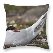 Arctic Tern In Its Nest Throw Pillow