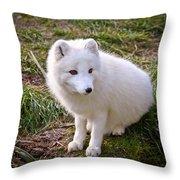 Arctic White Fox Throw Pillow