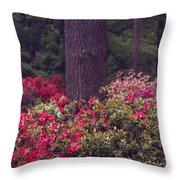 Around A Tree Throw Pillow