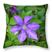 Ascotensis Throw Pillow