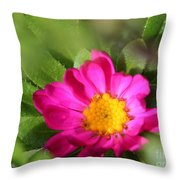Aster From The Daylight Mix Throw Pillow