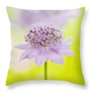 Astrantia 'larch Cottage' Throw Pillow