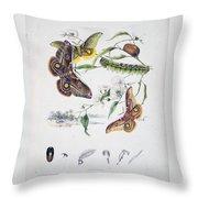 Australian Butterflies Throw Pillow
