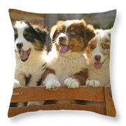 Australian Sheepdog Puppies Throw Pillow