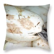 Baby Black Rat Snake Throw Pillow