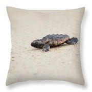 Baby Loggerhead Sea Turtle Amelia Island Florida Throw Pillow