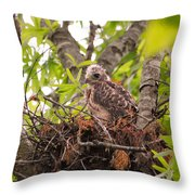 Baby Red Shouldered Hawk Throw Pillow