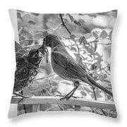 Baby Robin - Yummy Throw Pillow