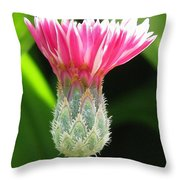Bachelor Button From The Frosted Queen Mix Throw Pillow