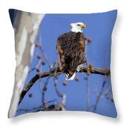 Bald Eagle 2 Throw Pillow