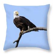 Bald Eagle 7 Throw Pillow