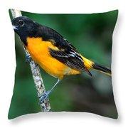 Baltimore Oriole Icterus Galbula Throw Pillow