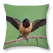 Barn Swallow Throw Pillow by Angie Vogel