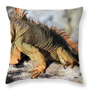 Basking In The Sun Throw Pillow