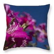 Bauhinia Purpurea - Hawaiian Orchid Tree Throw Pillow