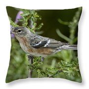 Bay-breasted Warbler Throw Pillow