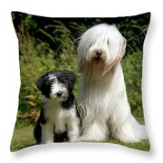 Bearded Collie And Puppy Throw Pillow
