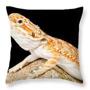 Bearded Dragon Pogona Sp. On Rock Throw Pillow
