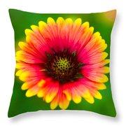 Beautiful Daisy Throw Pillow