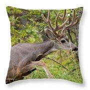 Beautiful Mule Deer Buck With Velvet Antler  Throw Pillow