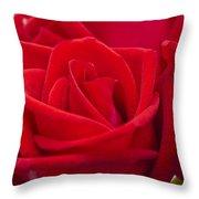 Beautiful Red Rose Close Up Shoot Throw Pillow