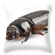 Beetle Aceraius Grandis Throw Pillow