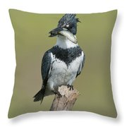 Belted Kingfisher With Fish Throw Pillow