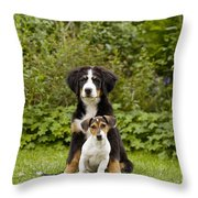 Bernese Mountain & Jack Russell Puppies Throw Pillow