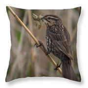 Big Dinner For Female Red Winged Blackbird I Throw Pillow