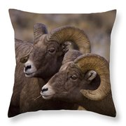 Big Horn Rams   #4664 Throw Pillow