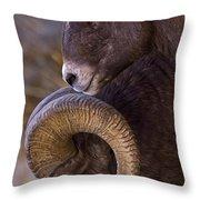Big Horn Rams   #4732 Throw Pillow