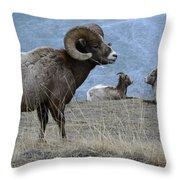 Big Horn Sheep 2 Throw Pillow