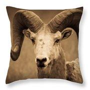 Big Horned Ram Throw Pillow