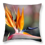 Bird Of Paradise  Throw Pillow by Gunter Nezhoda