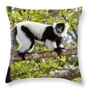 Black And White Ruffed Lemur Madagascar Throw Pillow