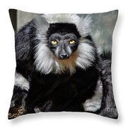Black And White Ruffed Lemur Throw Pillow