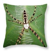 Black And Yellow Garden Spider Throw Pillow