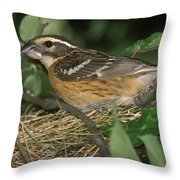 Black-headed Grosbeak Female Throw Pillow