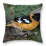 Black-headed Grosbeak Male Throw Pillow