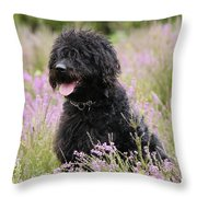 Black Labradoodle Throw Pillow