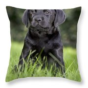 Black Labrador Puppy Throw Pillow