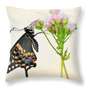 Black Swallowtail Butterfly Throw Pillow