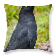 Black Tasmanian Crow Standing In Green Forest Throw Pillow