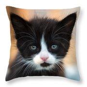 Black And White Kitten Throw Pillow