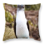 Blue Footed Boobie Dancing Galapagos Throw Pillow