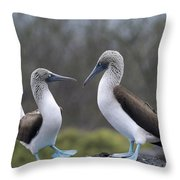 Blue-footed Boobies Courting Galapagos Throw Pillow