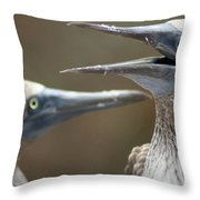 Blue-footed Boobies Throw Pillow