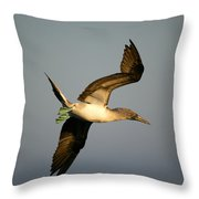 Blue-footed Booby, Sula Nebouxii, Santa Throw Pillow